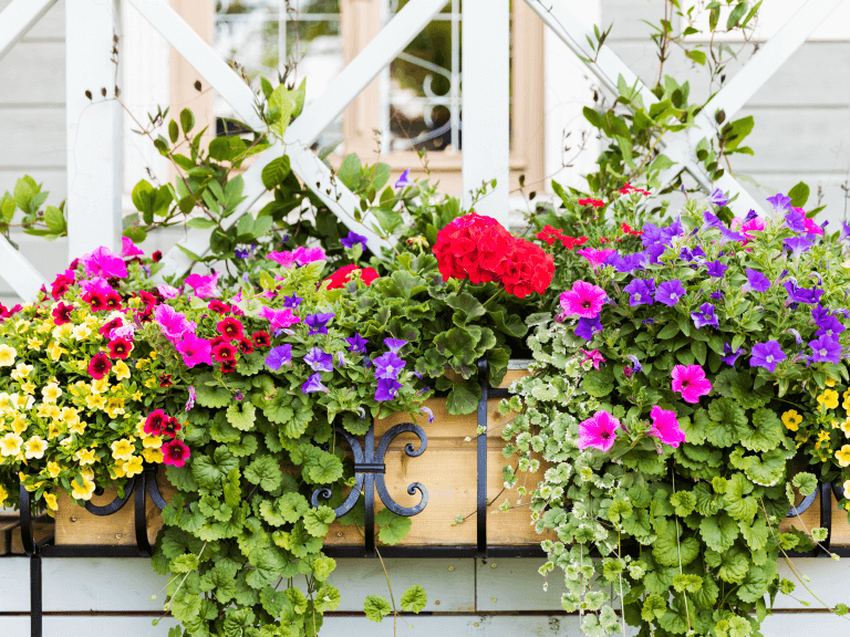 how plants can add texture to your home's exterior